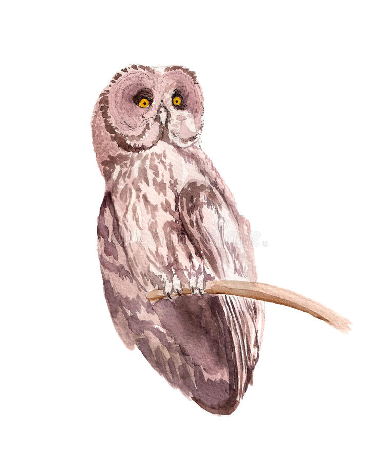 Brown owl. Watercolor image of brown owl isolated on white royalty free illustration