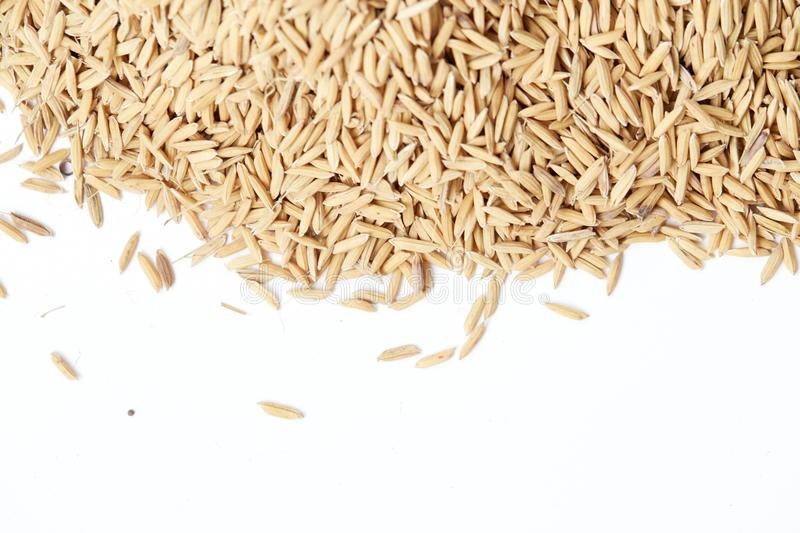 Brown paddy rice closed up Background royalty free stock image