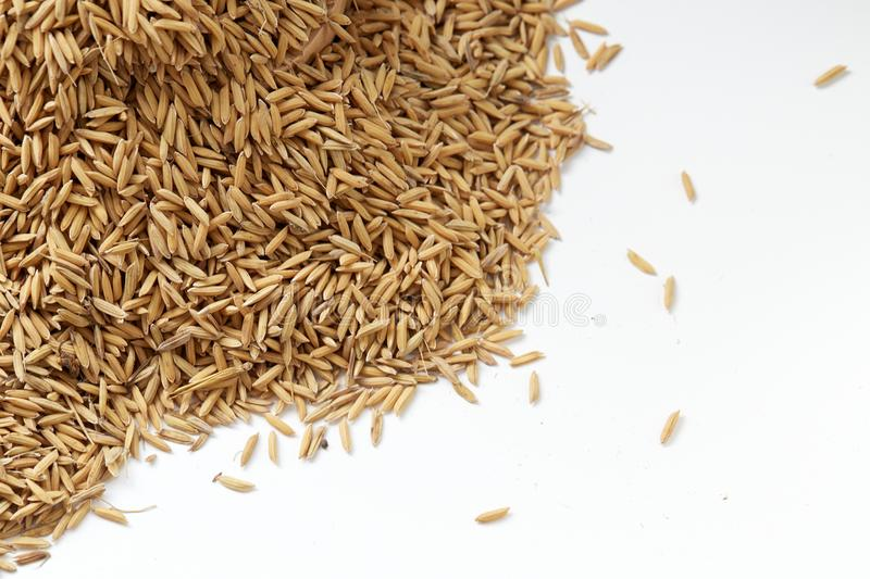 Brown paddy rice closed up Background royalty free stock photos