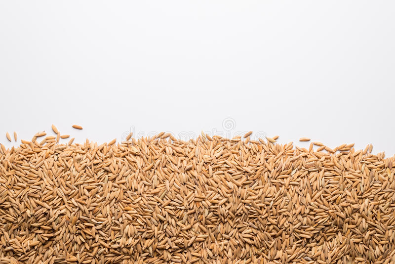 Brown paddy rice closed up background stock photo