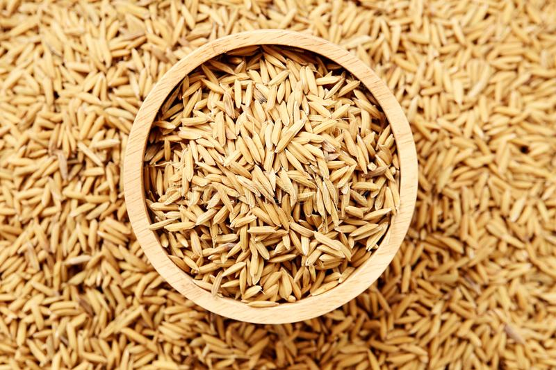 Brown paddy rice closed up stock photos