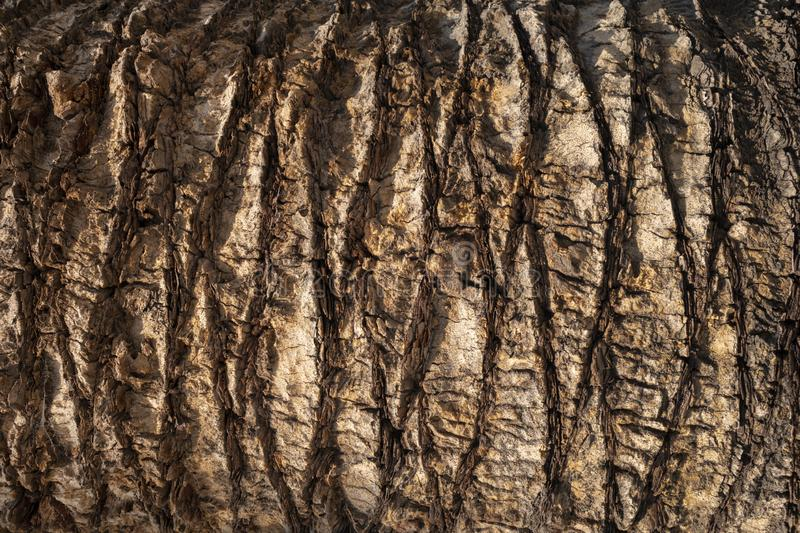 Brown palm tree trunk texture background. Natural organic material. Brown palm tree trunk texture background. Natural organic material stock photo