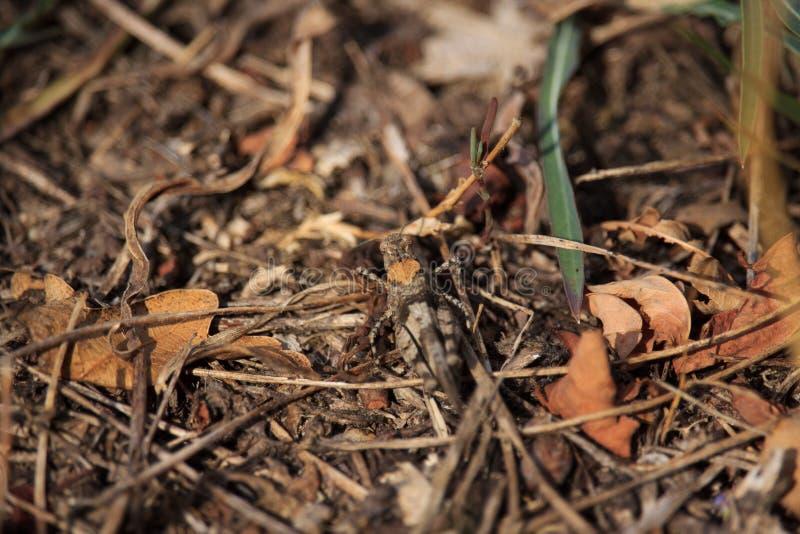 Brown pasikonik na liściach na zmierzchu fotografia royalty free