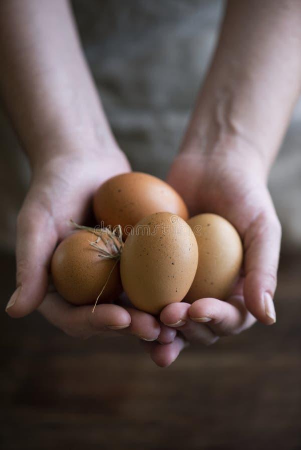 Brown pasma organicznie bezpłatni jajka obraz stock