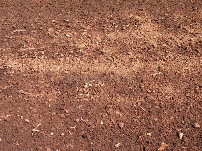 Brown peat texture. Natural brown peat surface texture suitable as background, Lithuania royalty free stock photography