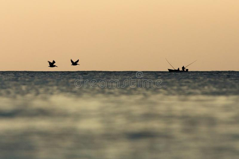 Brown Pelican, Pelecanus occidentalis flying with outstretched wings on horizont towards the boat of fishermen, Tobago island. Caribean nature, exotic stock photography