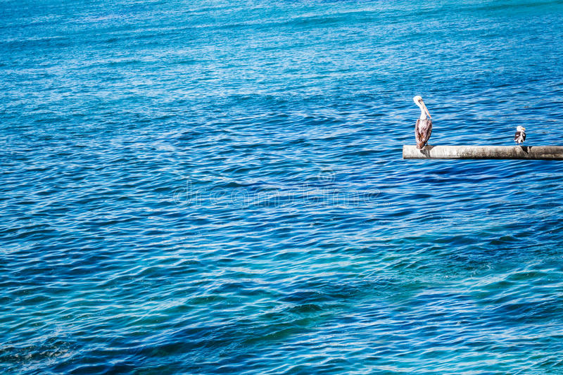 Download Brown Pelican And Seagull On The Pole Stock Image - Image of lagoon, shore: 90635433