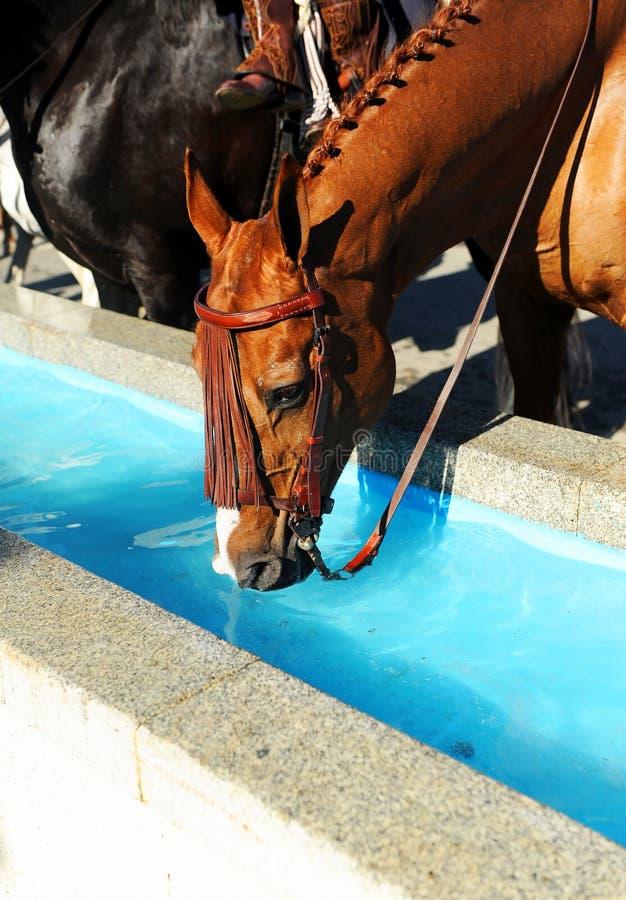 Brown-Pferd, das in einem Wassermast, Spanien trinkt stockfotos