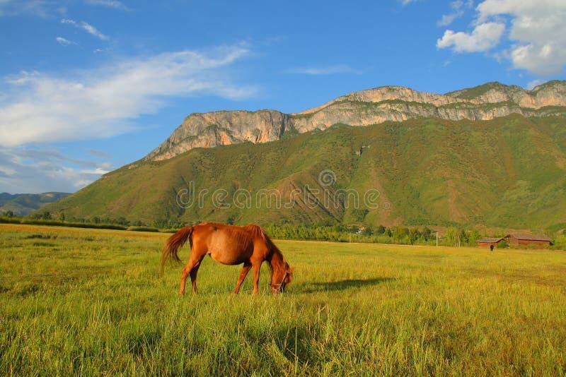 Brown-Pferd, das Gras auf der Weide, mit dem schönen heiligen Berg Gemu im Hintergrund isst lizenzfreie stockbilder