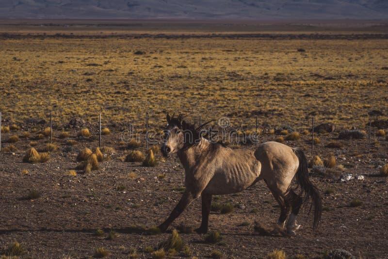 Brown-Pferd, das in das Tal läuft lizenzfreie stockfotos