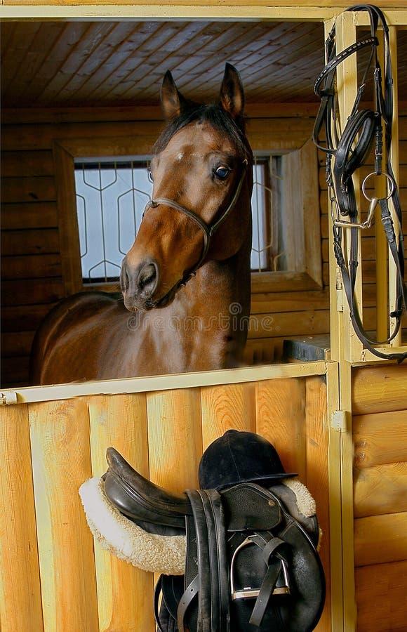 Brown-Pferd in der stabilen Tür manipuliert lizenzfreies stockfoto
