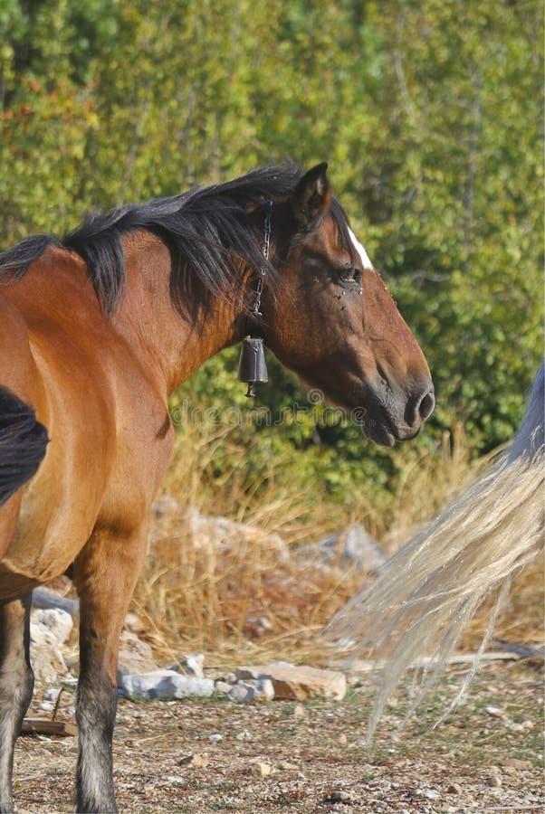 Brown-Pferd in der Weide lizenzfreies stockfoto