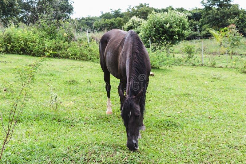 Brown-Pferd im Freien gegen grüne Bäume lizenzfreie stockfotos