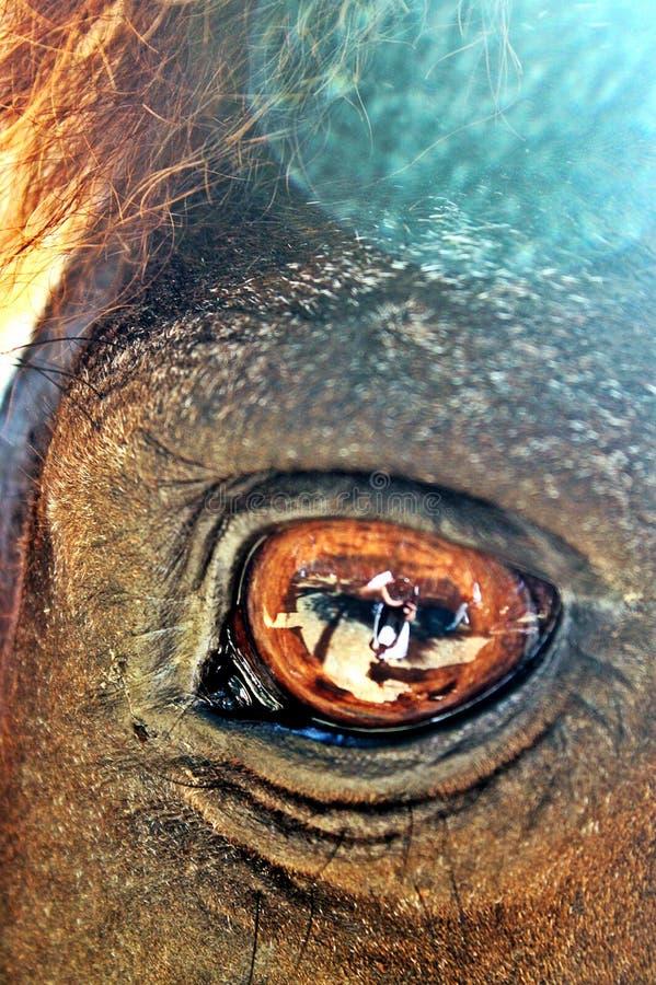 Brown-Pferd mit braunen Augen stockfotografie