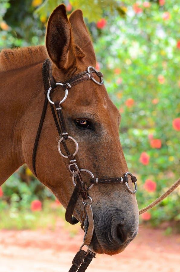 Brown-Pferd mit Sattel stockbilder