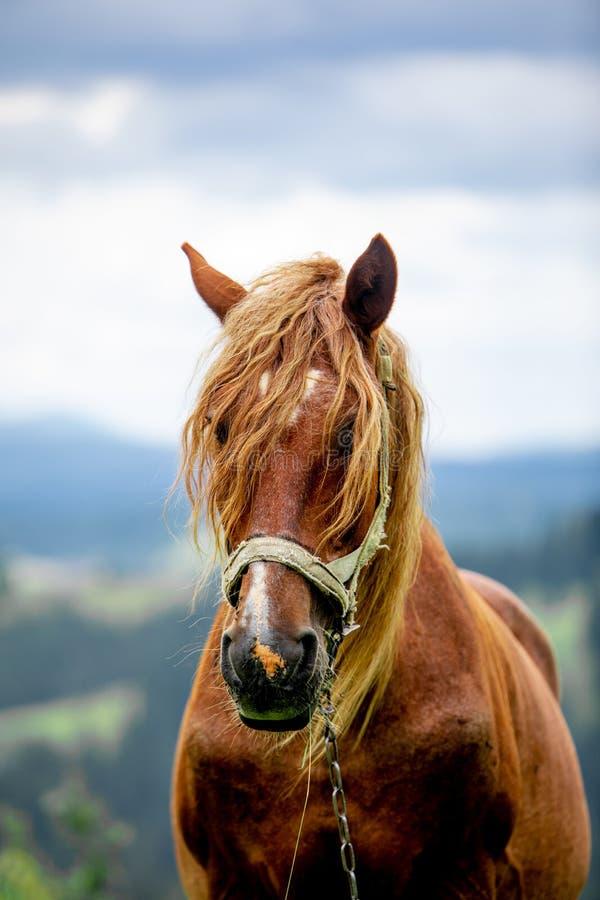 Brown-Pferdeabschlu? herauf Portr?t lizenzfreie stockbilder
