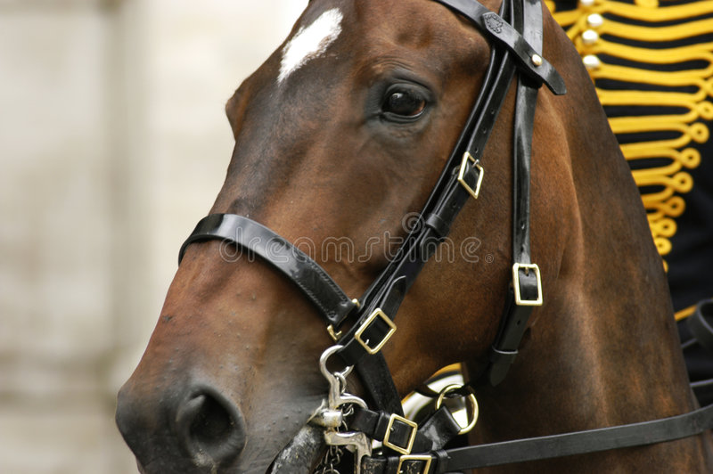 Brown-Pferdenkopf stockbilder