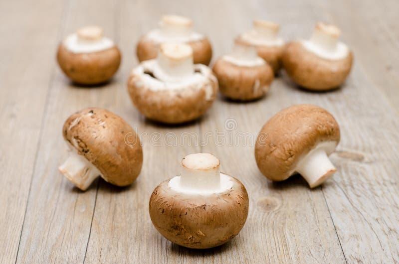 Brown-Pilze lizenzfreie stockbilder