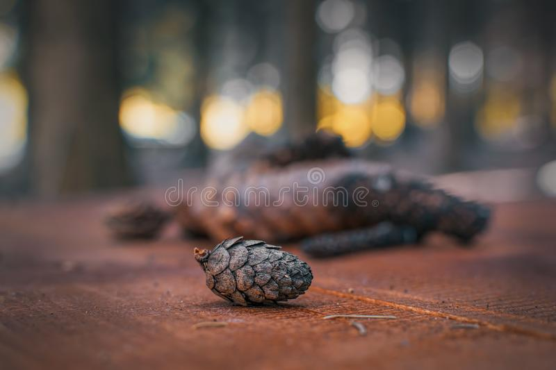 Brown pine cone on blurred background. Brown pine cone on blurred and colorful background stock photography