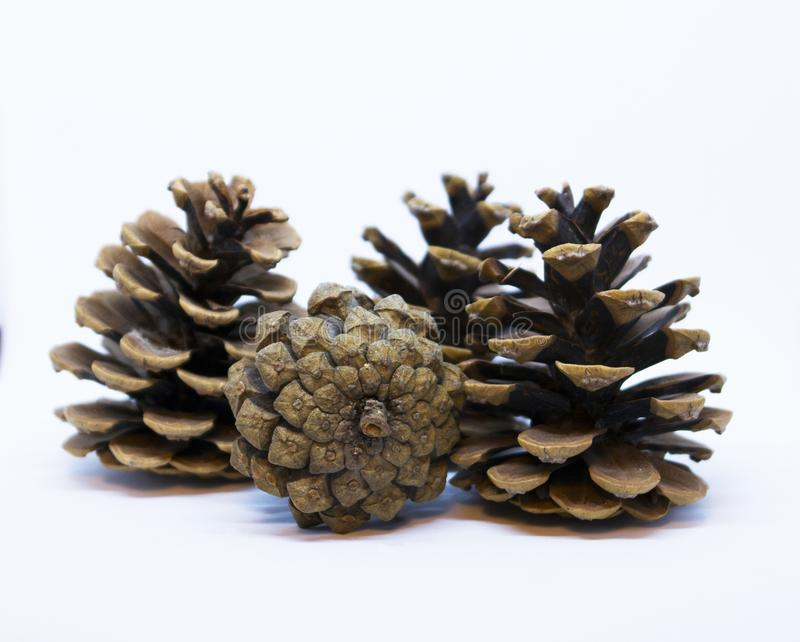 Brown pine cone. Isolated on white background stock images