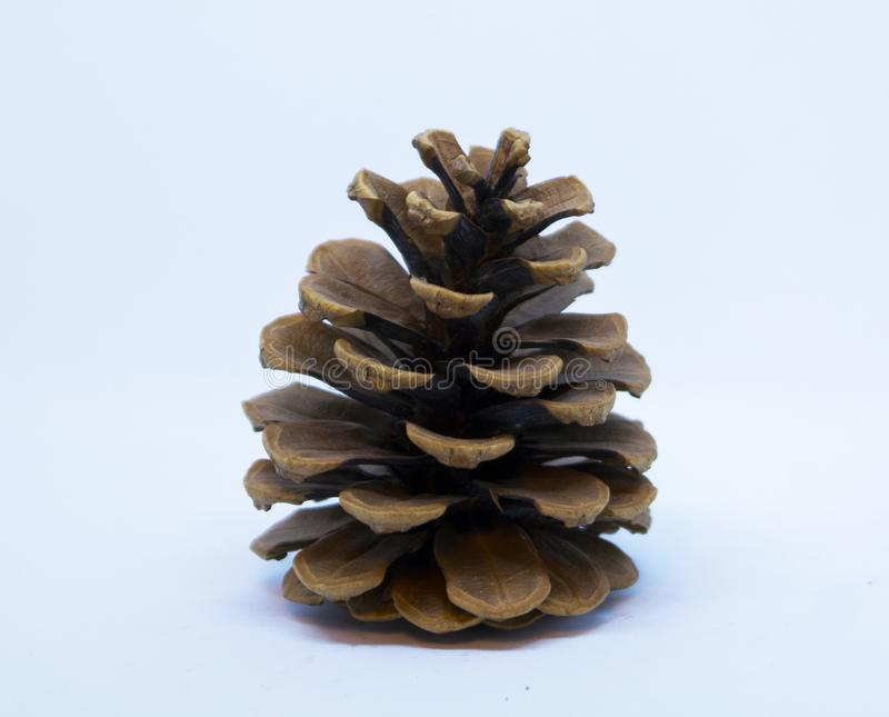 Brown pine cone. Isolated on white background stock photo