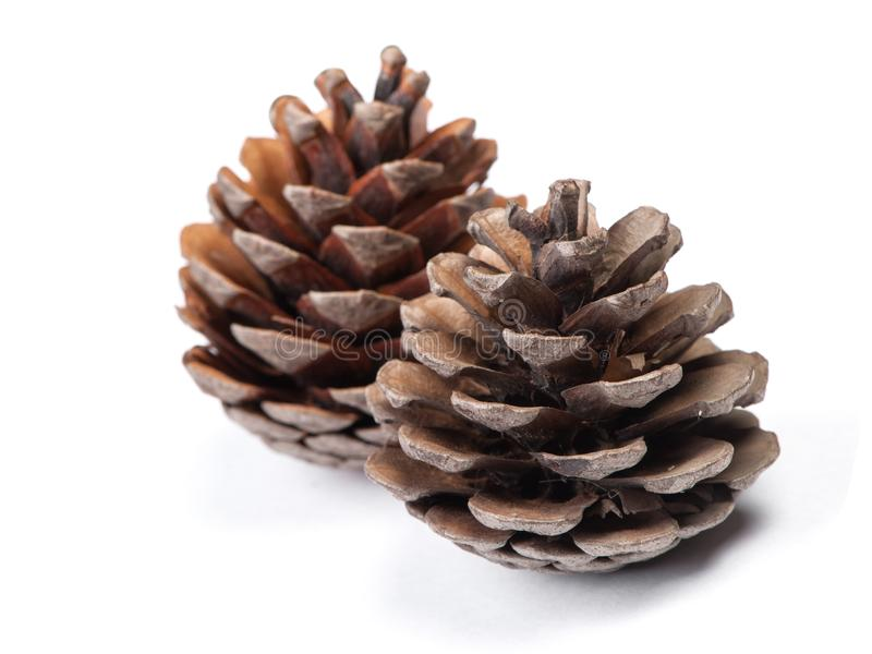 Brown pine cone. Isolated on white background royalty free stock images