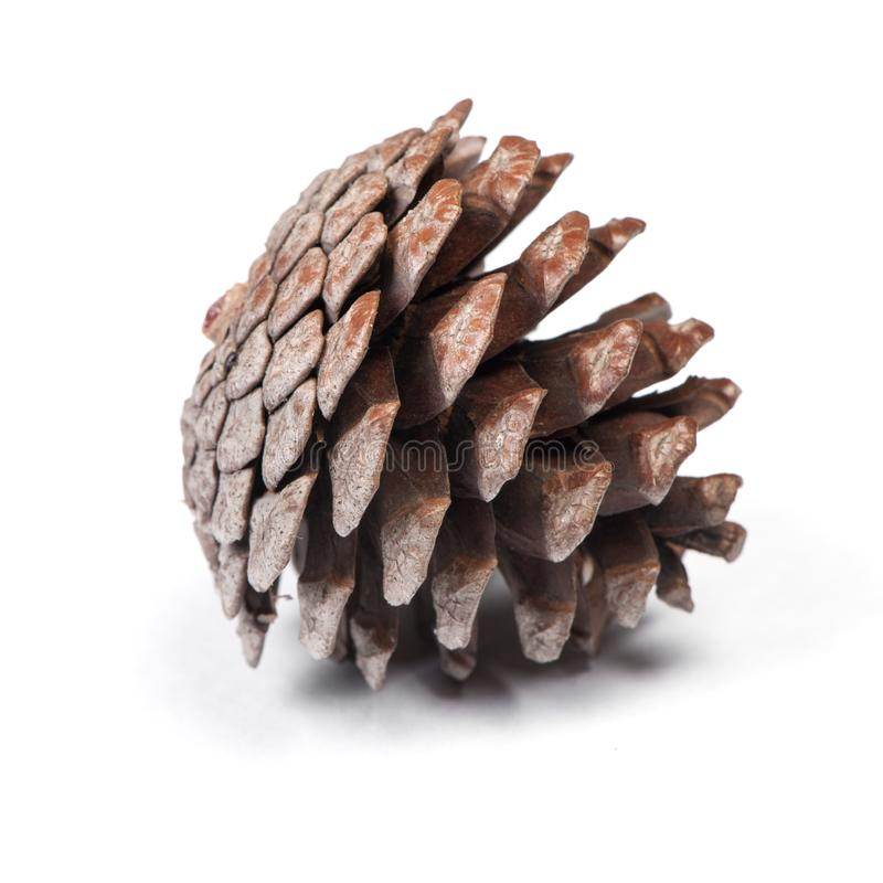 Brown pine cone. Isolated on white background royalty free stock photos