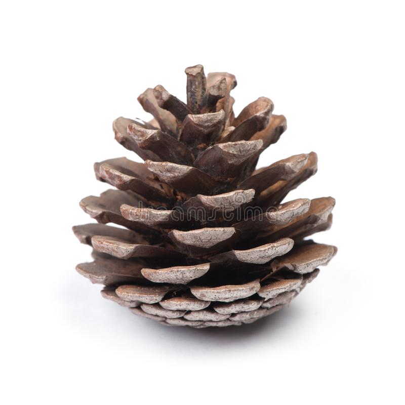 Brown pine cone. Isolated on white background stock photos