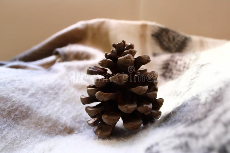 Brown pine cone on the plaid. Brown pine cone on the ornamented plaid at home stock images