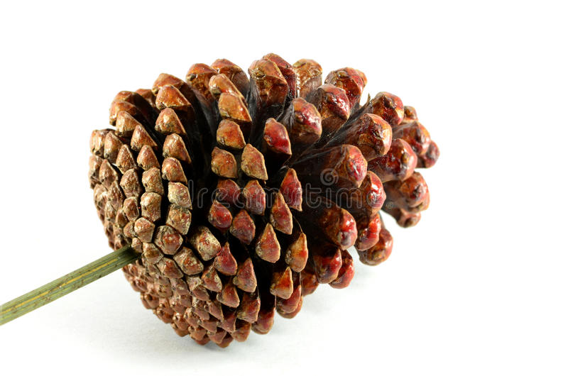 Brown Pine Cones Stock Photos