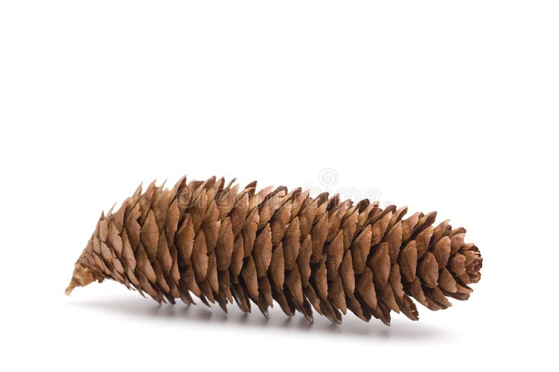 Pinecone on a White Background stock photo
