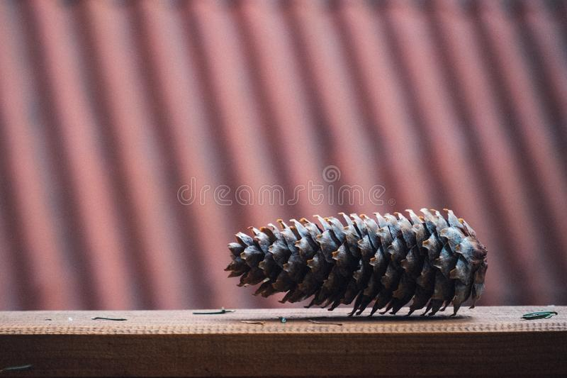 Brown Pinecone on Brown Wooden Surface stock photos