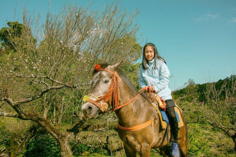Brown-Pony mit dem Sattel, der im Park mit natürlichem Hintergrund steht stockfotografie