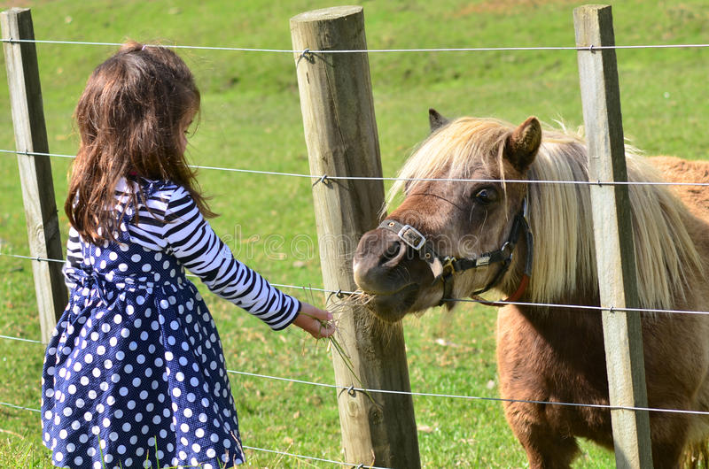 Brown Pony outdoor. Little girl feeds brown Pony in the farm. Concept photo, childhood, animals, children stock images