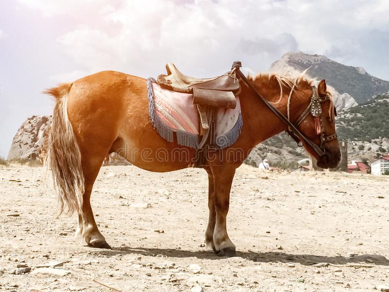 Brown pony with saddle standing on the dusty sandy ground against the backdrop of mountains. Brown pony with saddle standing on dusty sandy ground against the stock image