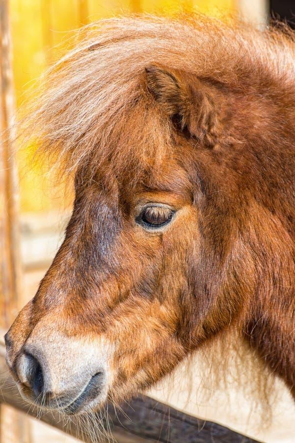 Brown-Pony schaut über der Abgrenzung der Koppel lizenzfreies stockbild