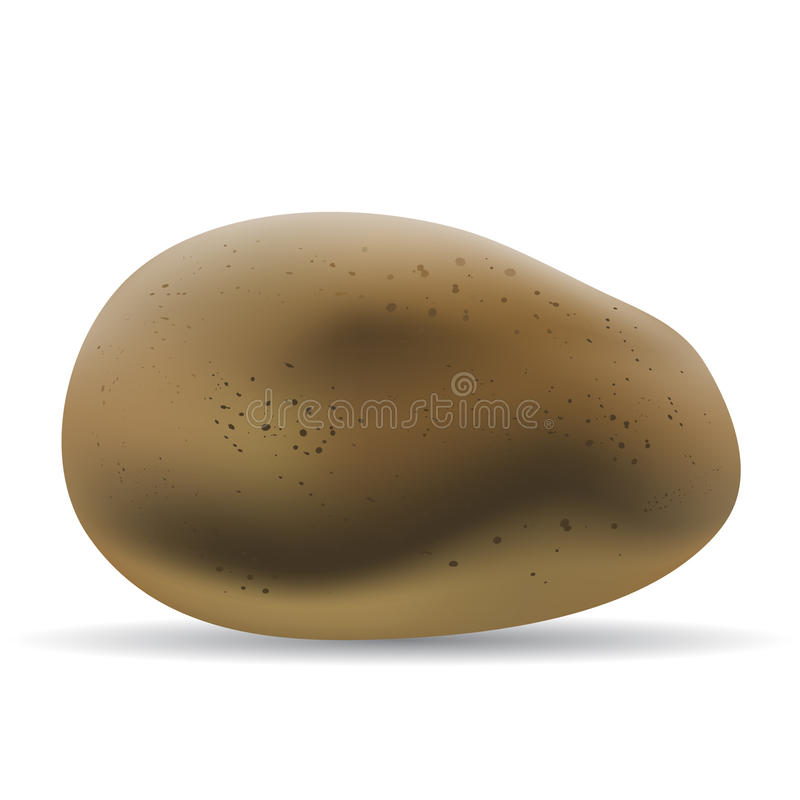 Brown potato. Isolated on white vector illustration