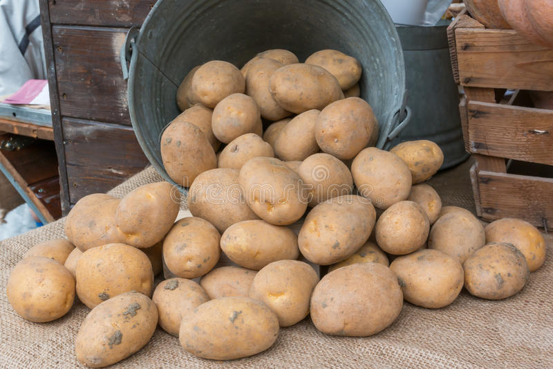 Brown potatoes rolling out of an old iron bucket over jute texti. A bunch of brown potatoes rolling out of an old iron pail over jute textile stock photo