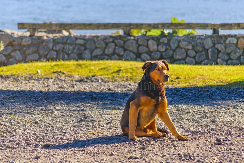 Brown Psi Odpoczywać przy Skalistą ziemią obraz royalty free