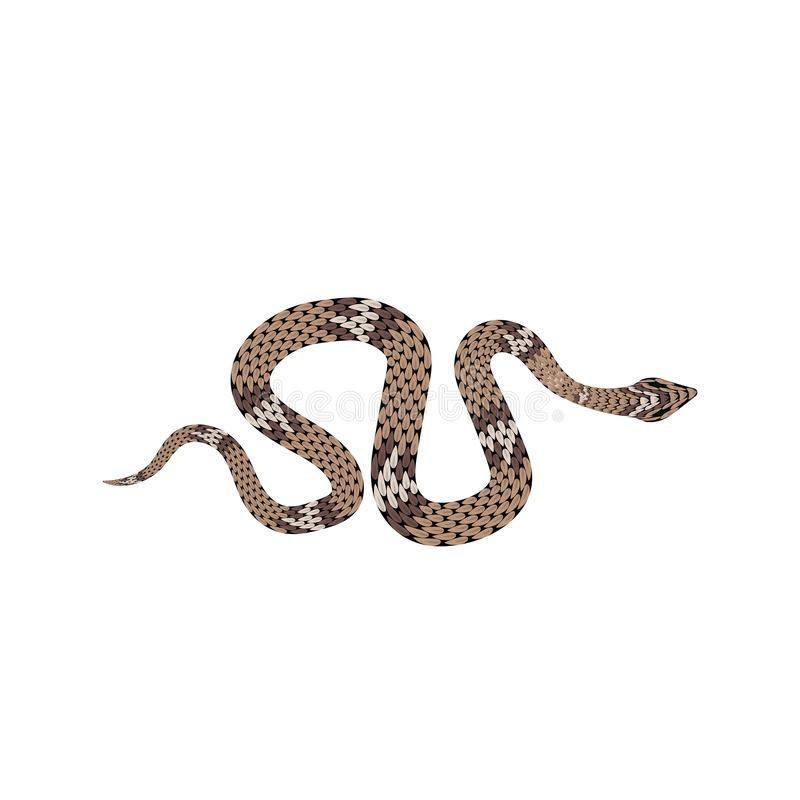 Brown python illustration. Isolated tropical snake on white background stock images