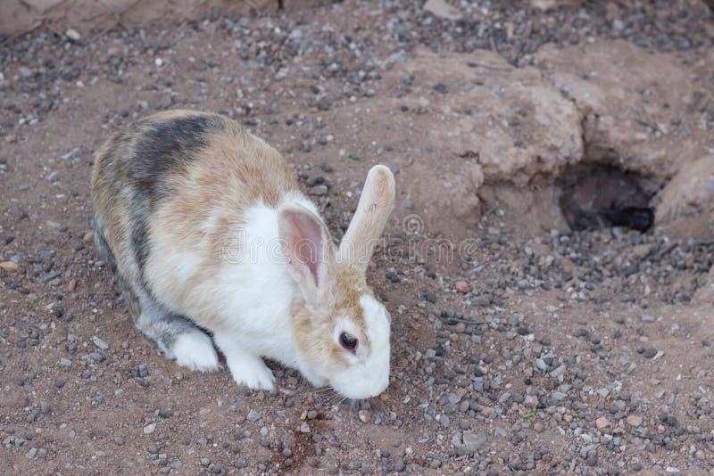 Brown rabbit beautiful select focus, colorful rabbit, close-up brown rabbit. stock photo