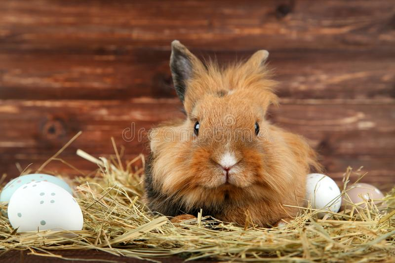 Rabbit with hay and easter eggs royalty free stock image