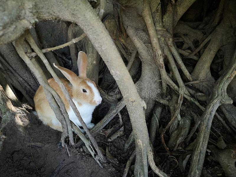 Brown rabbit hide in tree hollows royalty free stock photo