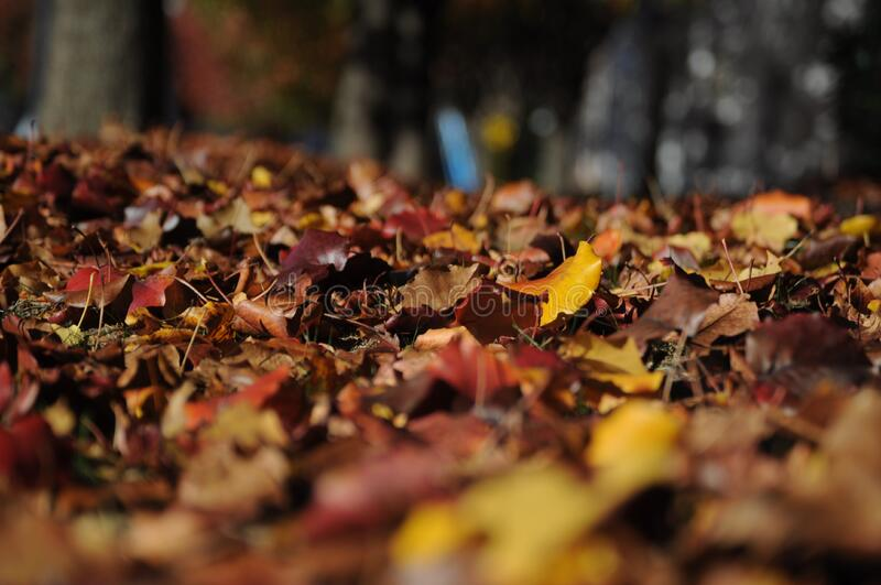 Brown and Red Dried Leaves on Brown Soil royalty free stock photos