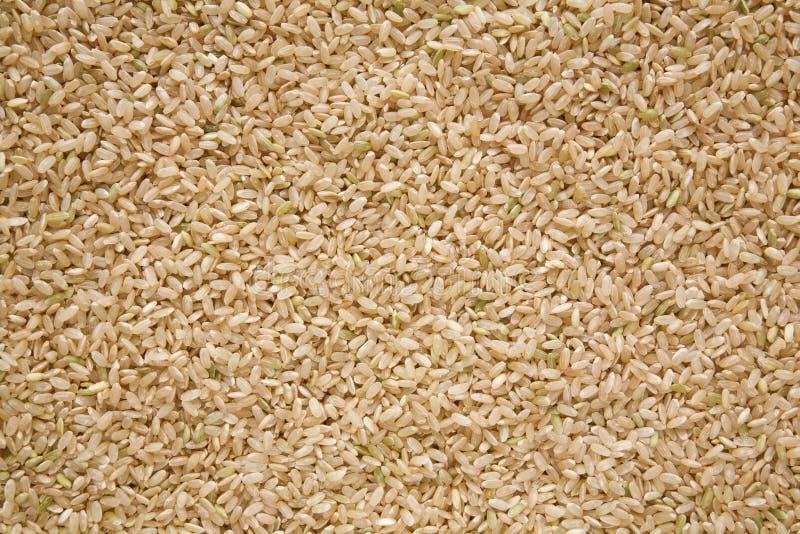 Brown-Reis, mittleres Korn lizenzfreies stockbild