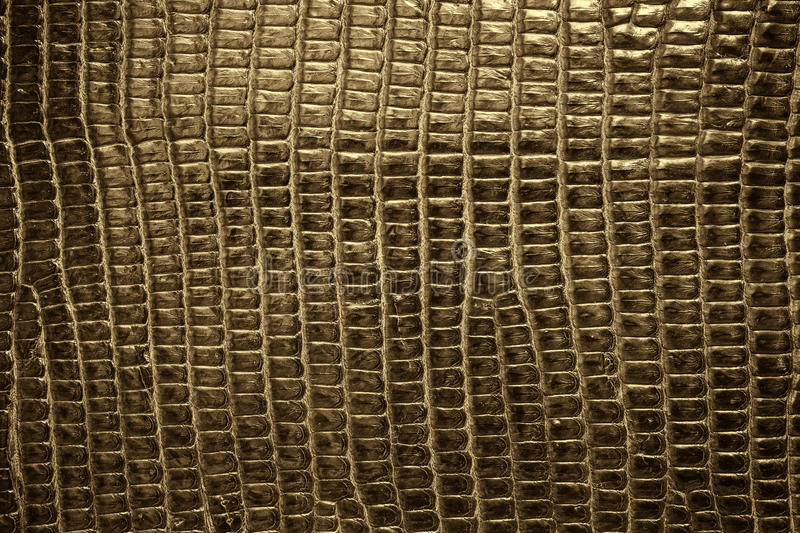 Brown reptile leather texture background.  royalty free stock photo