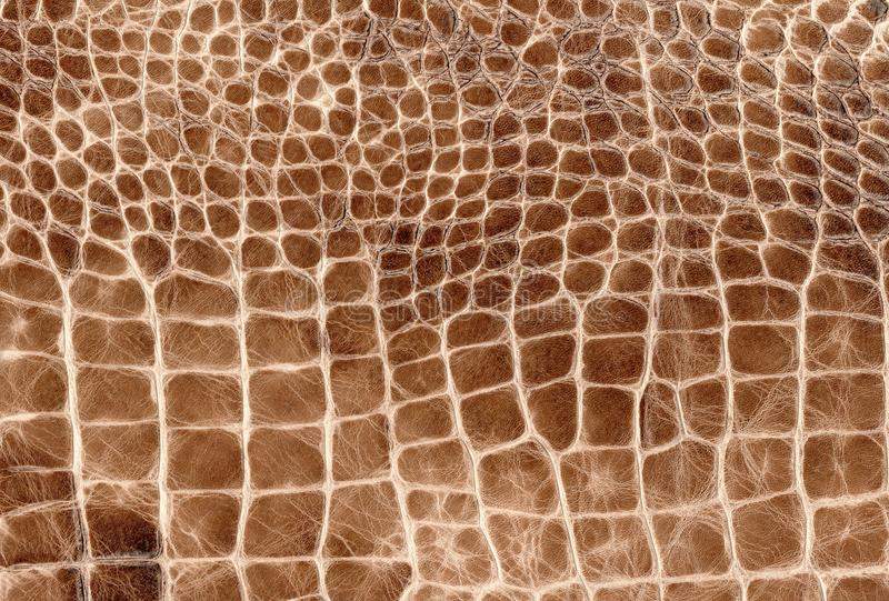 Brown reptile natural leather texture. Snake, crocodile or dragon skin pattern. Element for design. Medieval, exotic or fantasy background royalty free stock image