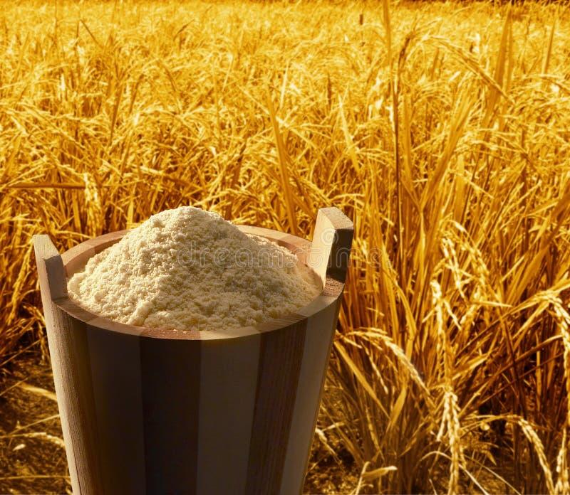 Download Brown rice stock image. Image of powder, ingredient, cooking - 8215319
