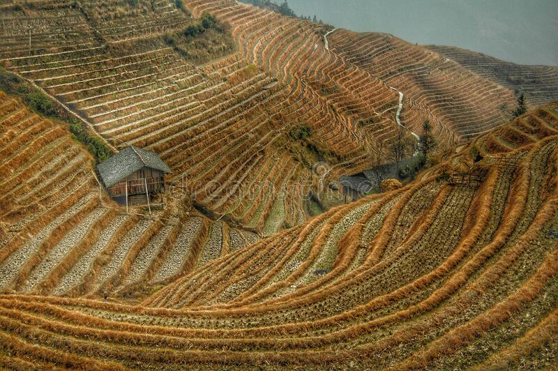 Brown Rice Terraces View stock images