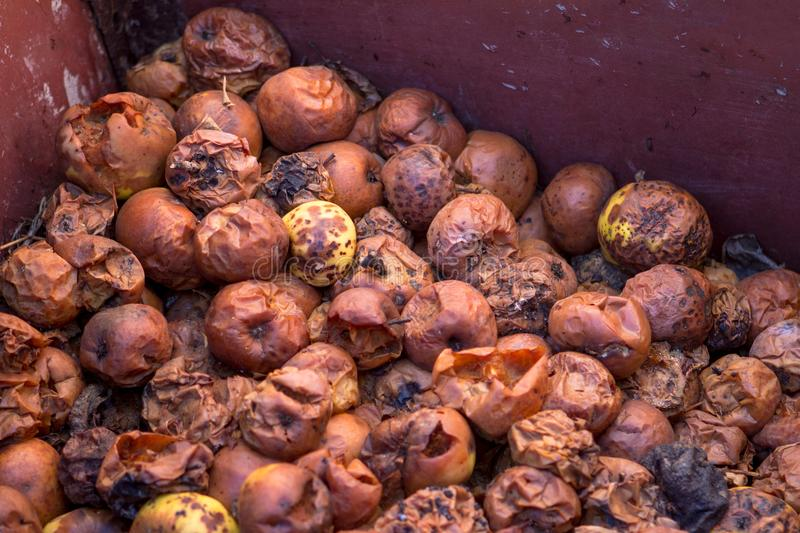 Rotten apples in the form of compost royalty free stock photos